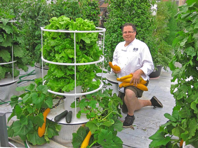 Bidwells_Chef Owner John Mooney-Aeroponic Rooftop Garden.